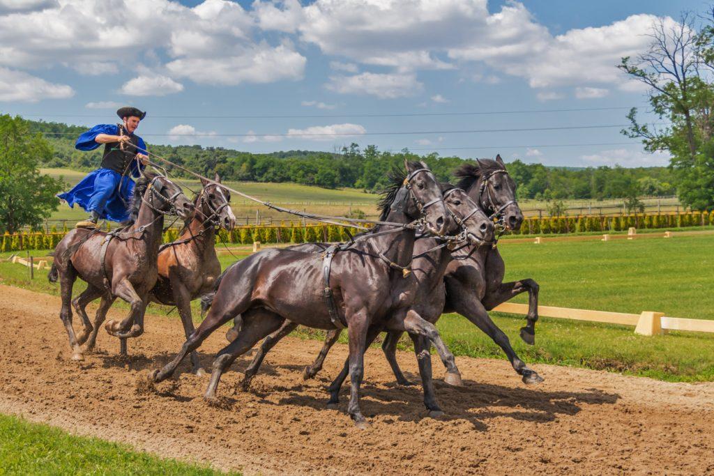 5 Pferde mit stehendem Reiter